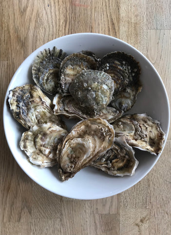 Native and Rock oyster taster samples