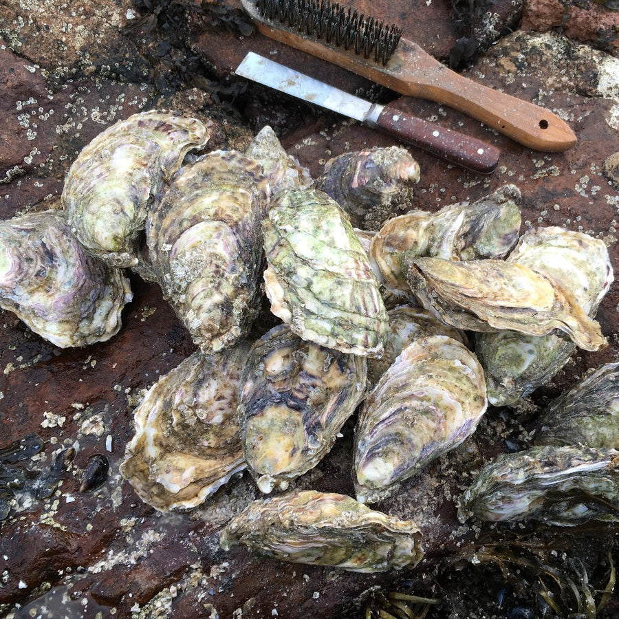 These are our special Extra Large Rock oysters, a Big Lad (Gaelic: Balach Mòr), grown on our farm in An Loch Beag (Little Loch Broom), Wester Ross, Scotland. They are the same animal as our standard Rock Oyster (Gaelic: Eisear Cloiche) but they have been cultured for a couple of extra seasons to make them nice and big!