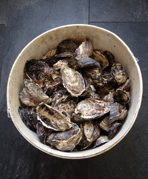 Native Oyster & Shellfish Company - Online Gift Card