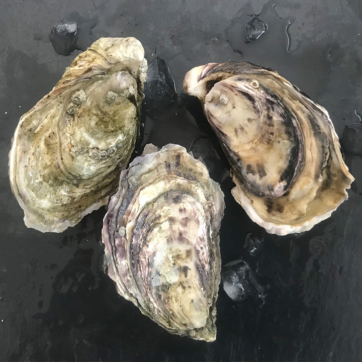 Our Rock Oyster (Gaelic: Eisear Cloiche) grown on our farm in An Loch Beag (Little Loch Broom), Wester Ross, Scotland.