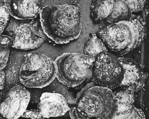Native Oyster in Black and White
