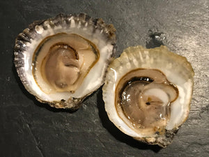 Shucked Native Oyster