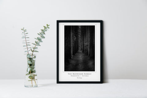 Redwood Forest (The Readies Collection) - Marked Images