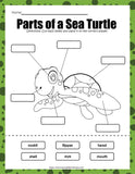 Sea Turtle Printable Activities