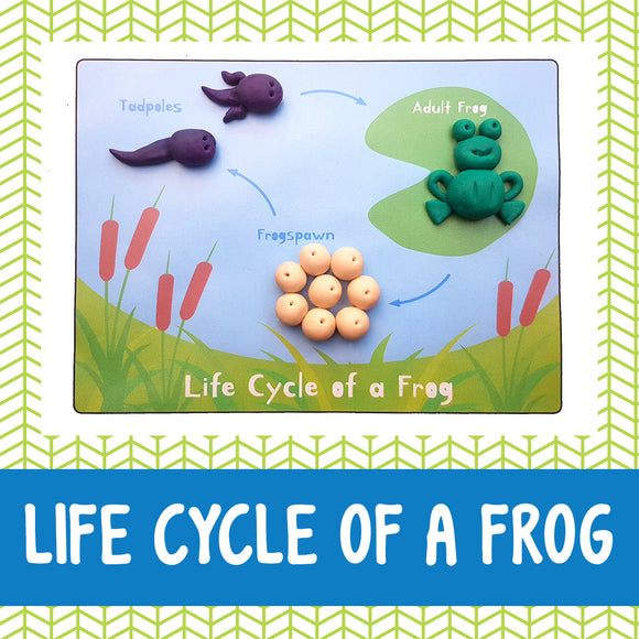 frog life cycle playdough mat