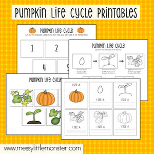 Pumpkin Life Cycle