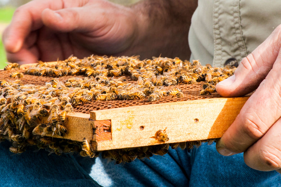 Is Raw Honey Worth It?