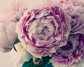 Peony Photo, Fine Art Print, Pink Flower Photography, French Country Decor