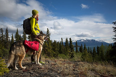 Woman and her dog overlooking a beautiful mountainous view in the fall.
