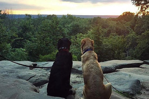 Two puppies overlooking a gorgeous sunset view at Cuyahoga Valley National Park, Ohio.