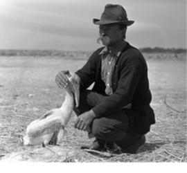 A young Teddy Rosevelt petting a Pelican in order to bring awareness to extinction of many bird species.