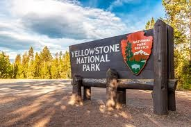 Yellow stone national park on a warm spring day
