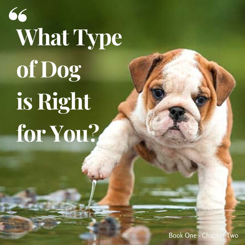 Chapter 2. What type of dog is right for you?