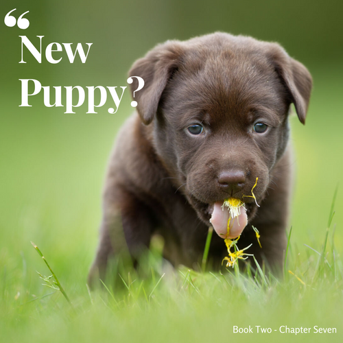So you're getting a new Puppy?