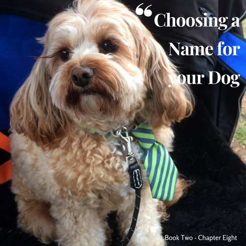 Chapter 8. Choosing a name for your Dog