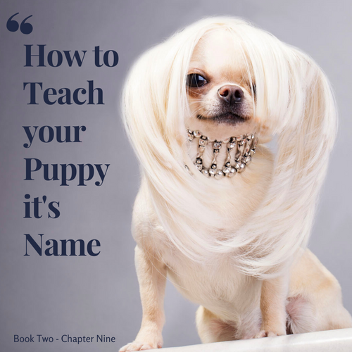 Chapter 9. How to teach your Puppy it's name