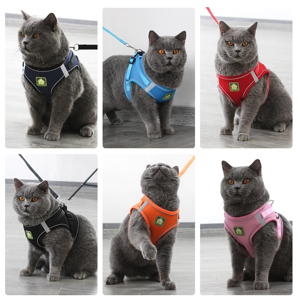 An image of six cats wearing the pink, orange, blue, red, black, and navy Reflective Cat Small-Dog Leash Vest Harness variations sold by Saint N Mike.