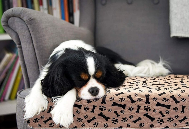 An image of a dog sleeping on the reusable doggy pad sold by Saint N Mike.