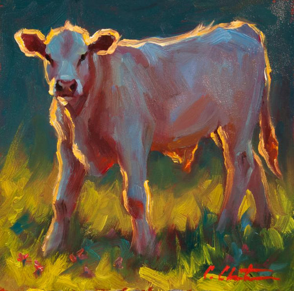 Oil painting by Cheri Christensen of a petite white calf standing in the grass looking out at the viewer against a warm sunset light