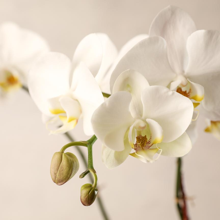 Order Plants from Jardiniere Flowers in Portsmouth New Hampshire. Order online for local delivery Seacoast Florist Maine and New Hampshire. Succulents, Succulent gardens phalaenopsis orchid for home, business/corporate/office, and events.