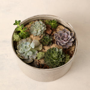 Medium Succulent Garden Jardiniere Flowers Portsmouth New Hampshire Seacoast New Hampshire Maine Wedding Retail Events Home Business Corporate NewEngland Flowers Plants Florist Order Online Desert Flowers Succulent Cactus Potted Plant Small Business Woman-Owned