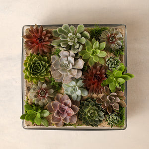 Large Succulent Garden Jardiniere Flowers Portsmouth New Hampshire Seacoast New Hampshire Maine Wedding Retail Events Home Business Corporate NewEngland Flowers Plants Florist Order Online Desert Flowers Succulent Cactus Potted Plant Small Business Woman-Owned