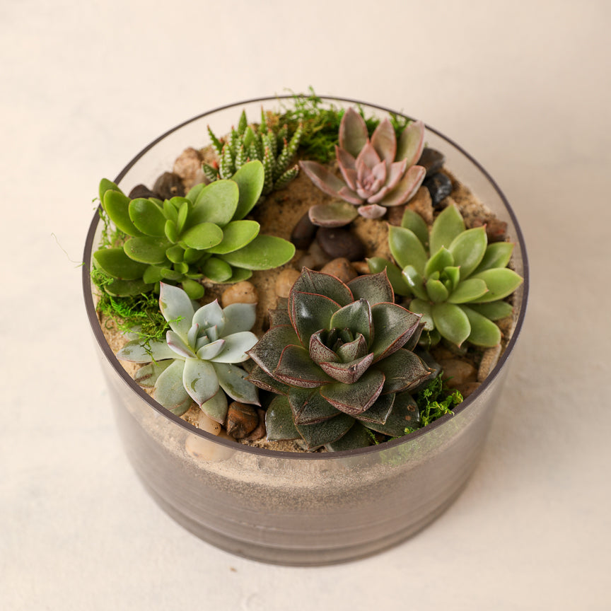 Small Petite Succulent Garden Jardiniere Flowers Portsmouth New Hampshire Seacoast New Hampshire Maine Wedding Retail Events Home Business Corporate NewEngland Flowers Plants Florist Order Online Desert Flowers Succulent Cactus Potted Plant Small Business Woman-Owned