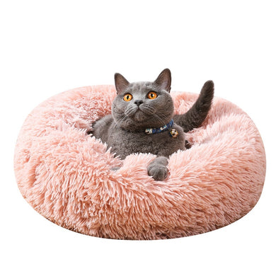 Grey cat in pink pet bed with collar