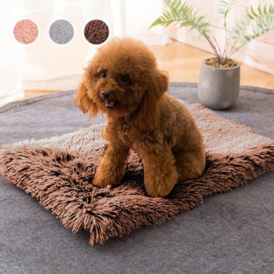 Dog on a brown fluffy pet bed