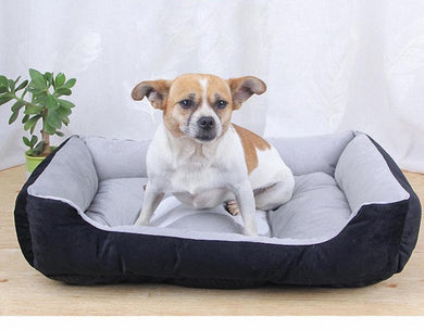 Dog on grey bone design bed