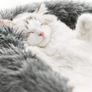 White cat sleeping in furry pet bed