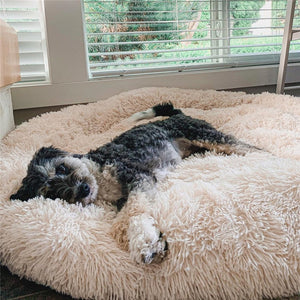 Dog lying on a beige pet bed