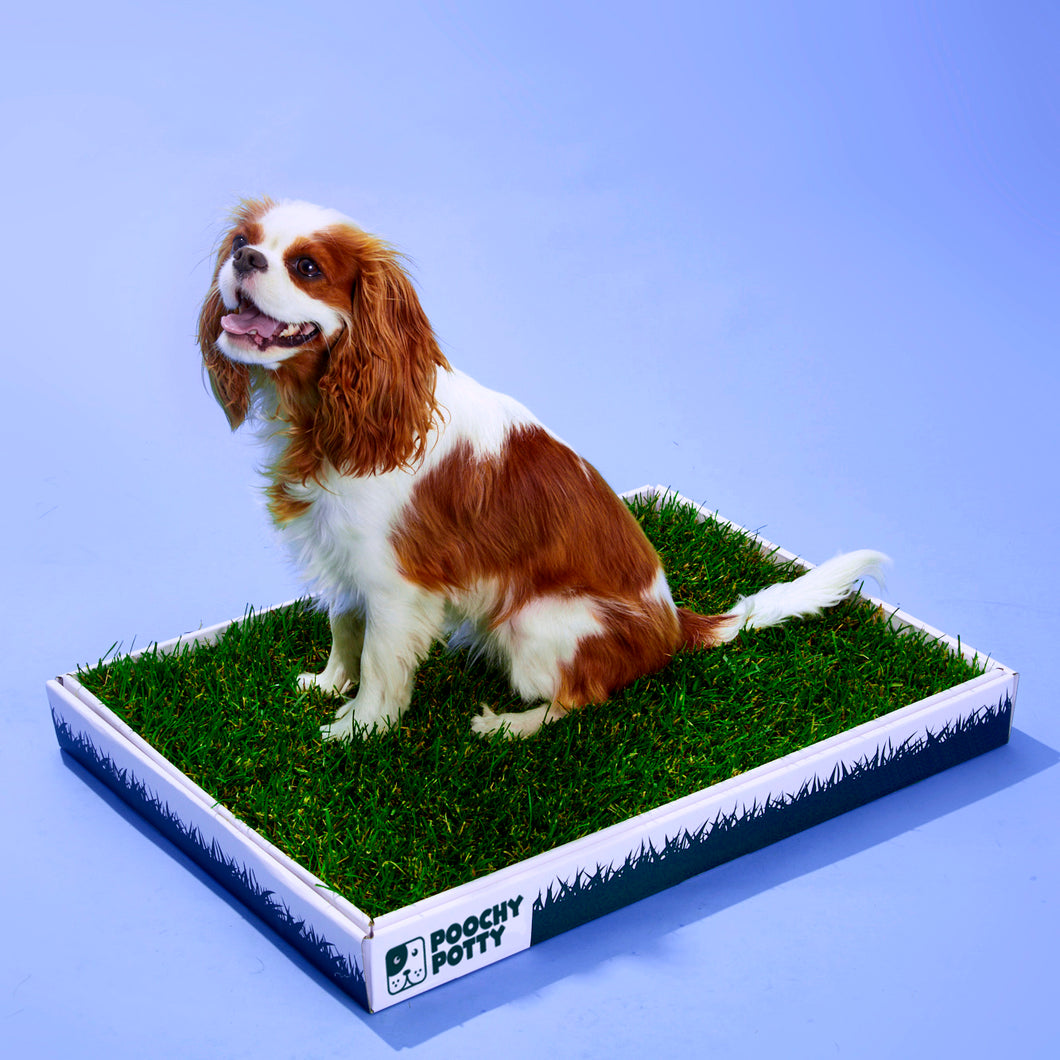 Poochy Potty Grass