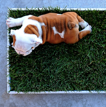 Load image into Gallery viewer, Poochy Potty Grass