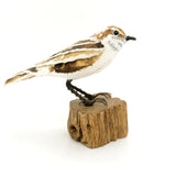 Suzanne Breakwell - Tree Creeper