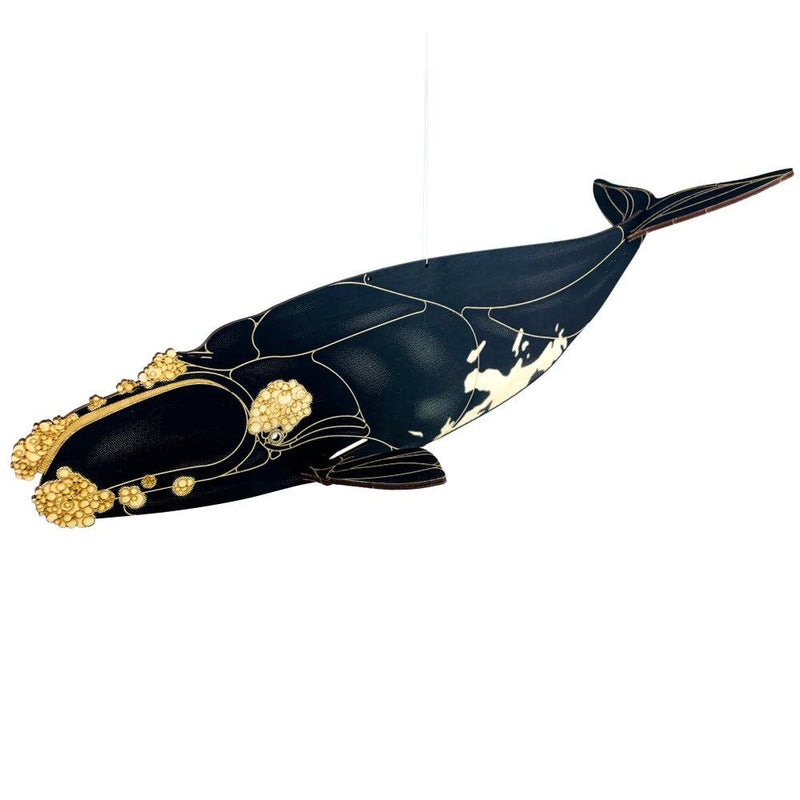 Right Whale Model Kit