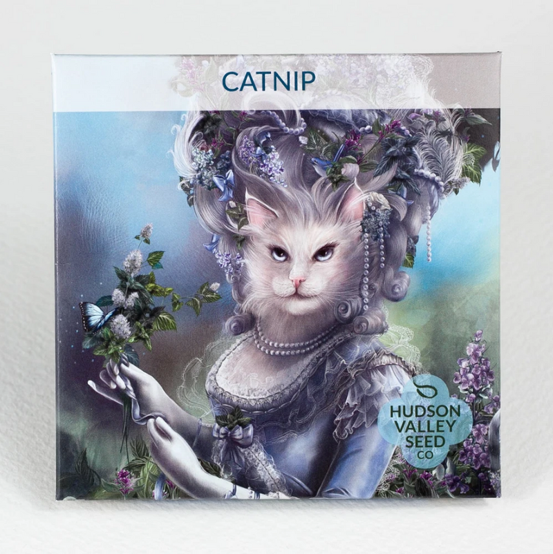Catnip Organic Seeds - Art Seed Packs