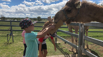 Things To Do These School Holidays: Summer Land Camels And The Surrounding Area