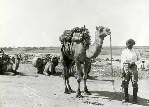 Bejah Dervish at Mullewa, WA, leaving for the Calvert Expedition, 1896. Image credit State Library of South Australia