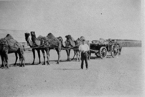 History of Camels in Australia