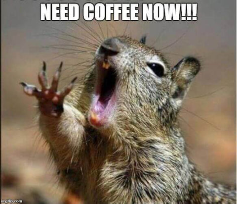 Need Coffee Now Squirrel Meme