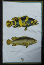 Load image into Gallery viewer, Yellow Fish Antique Print Tea Towel Black Edge UK Made