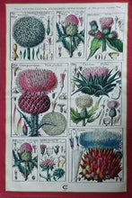 Load image into Gallery viewer, Thistle Antique Print Tea Towel 100% Cotton UK Made