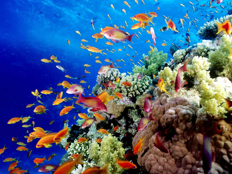 Great-Barrier-Reef-fish