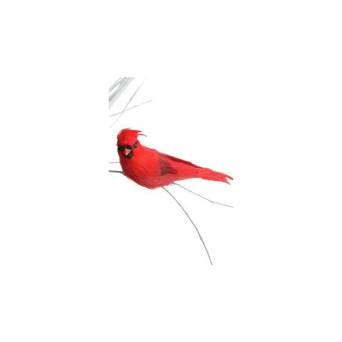 Red Cardinal on Clip