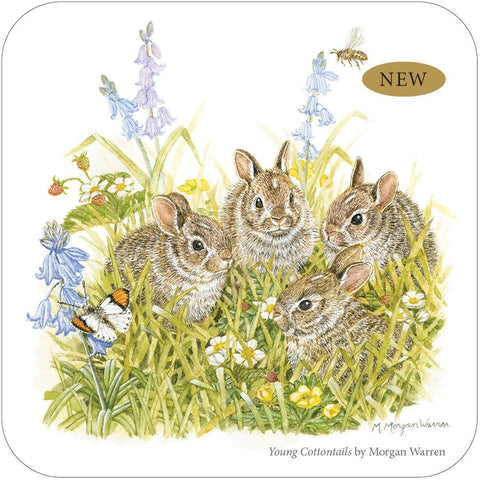 Young Cottontails Tin