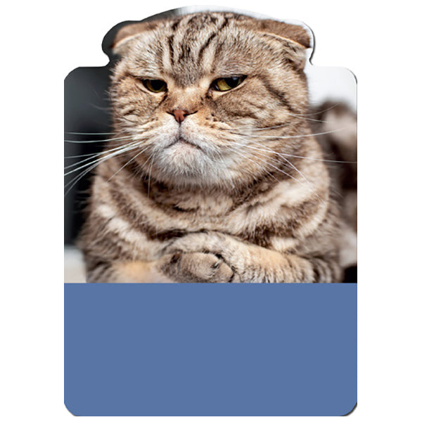 Cat: On Nerves - Birthday Card