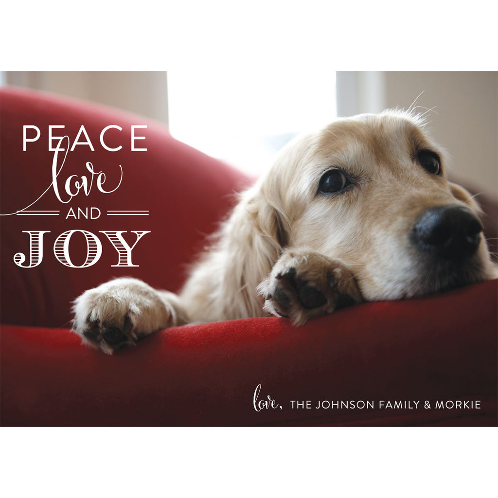 Pet Themed Holiday Photo Cards