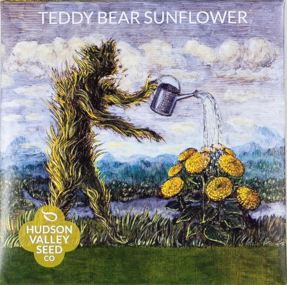 Teddy Bear Sunflower Seeds