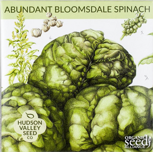 Abundant Bloomsdale Spinach Seeds